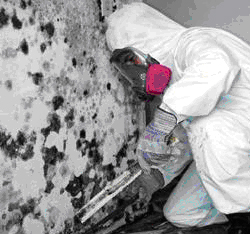 black-mold-remediation-cost-cincinnati-ohio